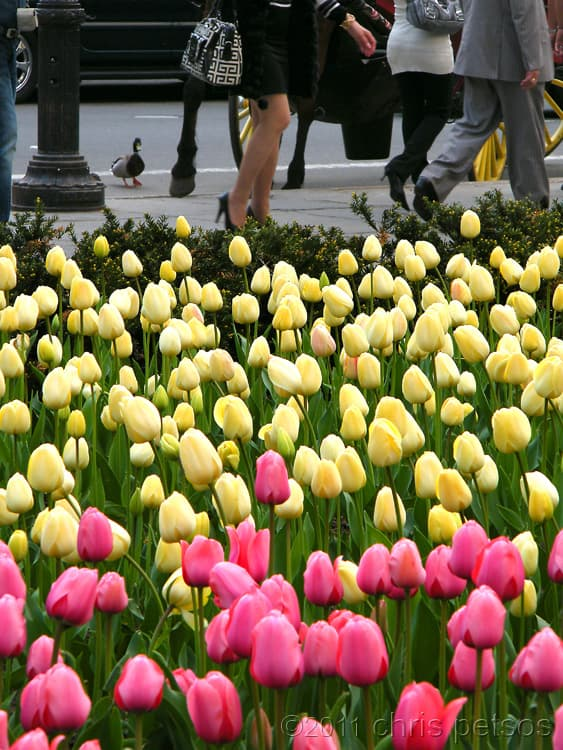 spring flowers nyc